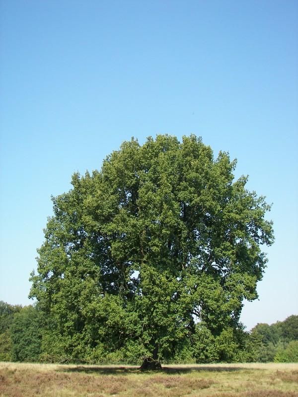 Baum Des Jahres Www Ederen De